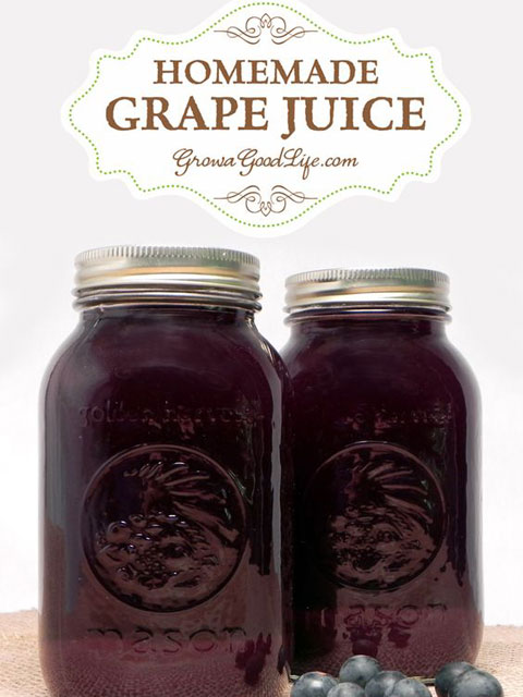 Homemade-Concord-Grape-Juice